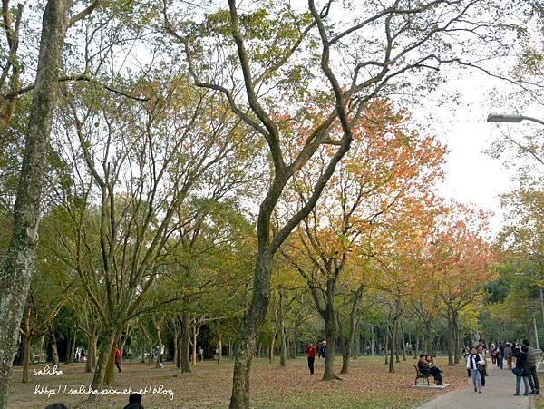 大安森林公園 (11).JPG