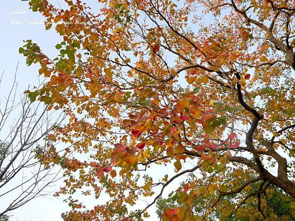 大安森林公園 (13).JPG