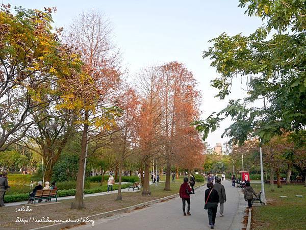大安森林公園 (19).JPG