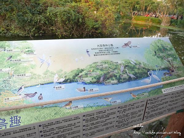 大安森林公園 (22).JPG