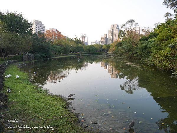 大安森林公園 (24).JPG