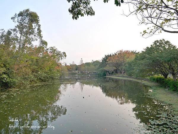 大安森林公園 (26).JPG