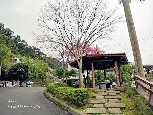 烏來賞櫻花景點花園新城 (20).jpg