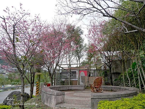 烏來賞櫻花景點花園新城 (21).JPG