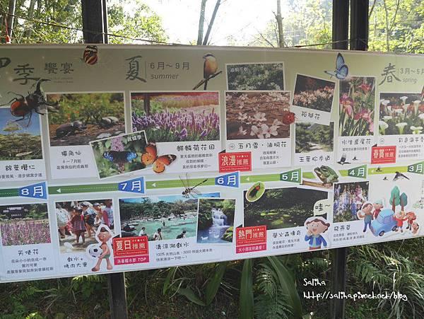 桃園旅遊景點桃源仙谷鬱金香花海 (7).JPG
