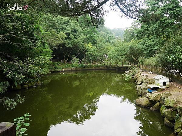 苗栗綠葉方舟 (11).JPG