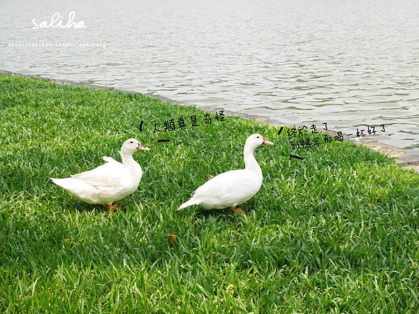 內湖大湖公園 (8).jpg