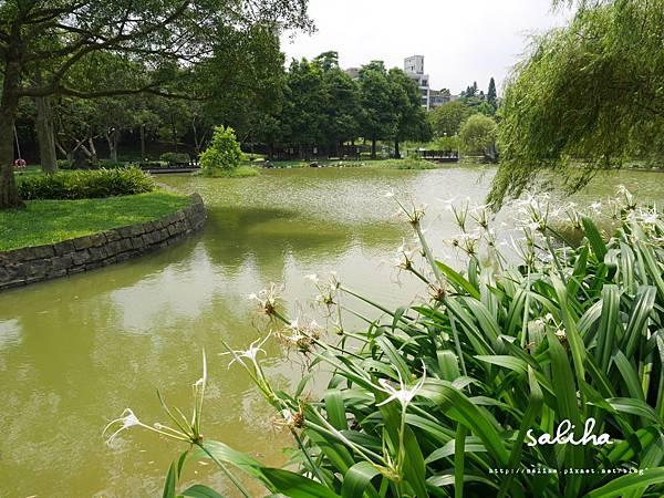 大湖公園 (66).JPG