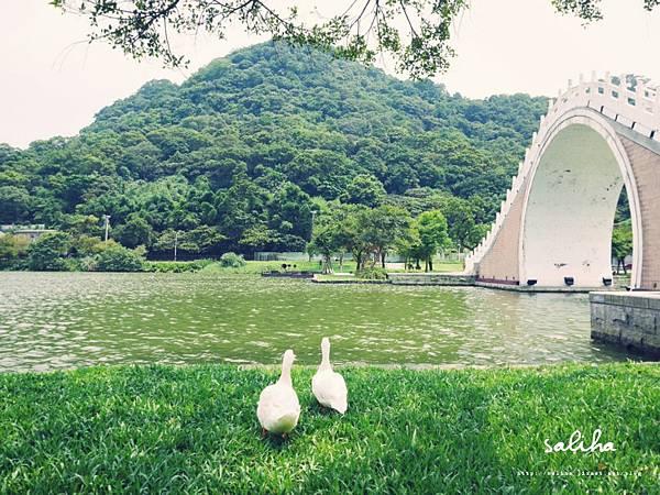內湖大湖公園 .jpg