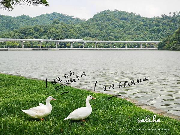內湖大湖公園 (2).jpg