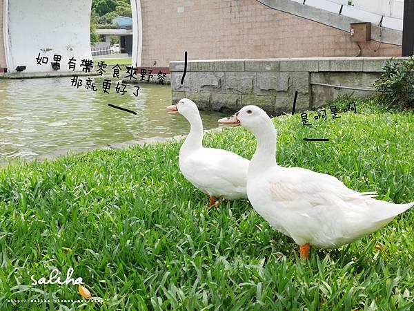 內湖大湖公園 (5).jpg