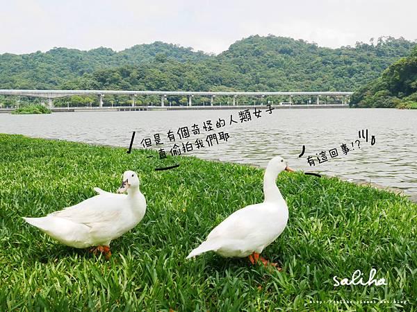 內湖大湖公園 (6).jpg