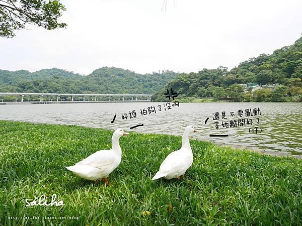 內湖大湖公園 (7).jpg