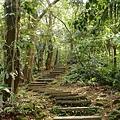 大板根熱帶雨林