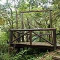 大板根熱帶雨林 景觀台