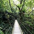 大板根熱帶雨林 彩虹橋