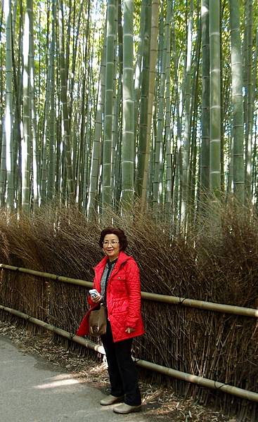 嵐山  竹林步道