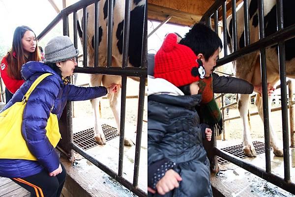 5-1 (2)擠牛奶.jpg