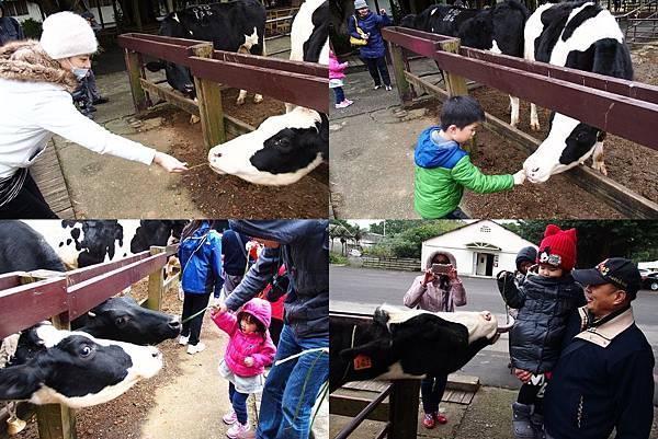 6 (1)餵牛1.jpg