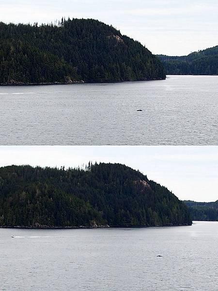 鯨魚出沒.jpg