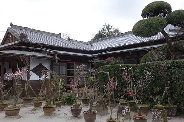 5佐多民子庭園 (7).JPG