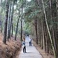 桃山步道 (6).JPG