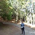 桃山步道 (7).jpg