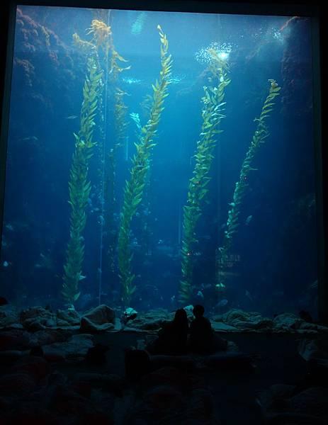 16巨藻缸 (2).JPG