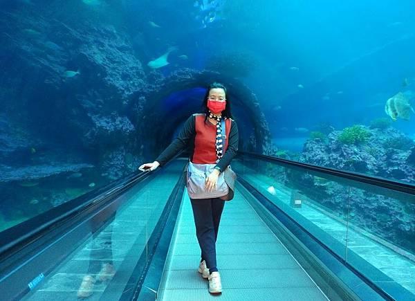 18 珊瑚王國(5)海底隧道.jpg