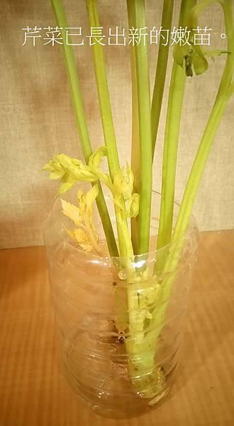 香菜(芹1