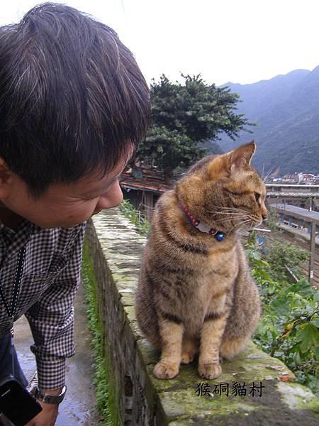 愛貓(猴硐貓村