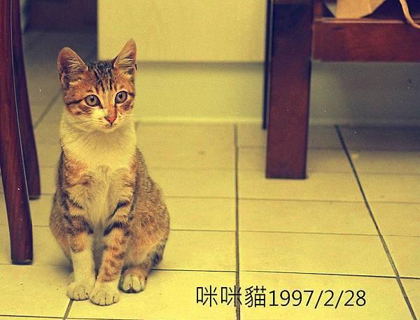 咪咪貓19970228