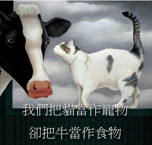 我們把貓當作寵物把牛當食物.jpg