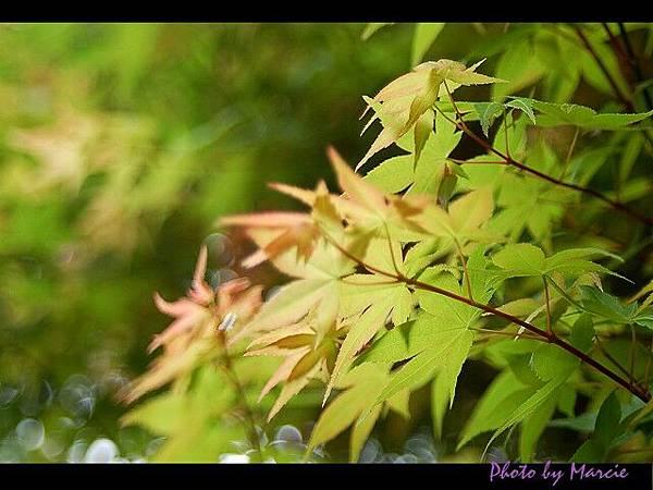 2006<台北>春