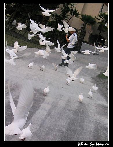 2004<花蓮>春