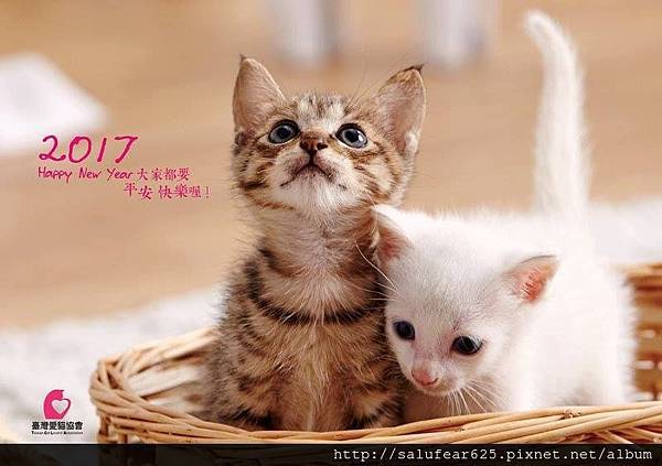 愛貓協會2.jpg