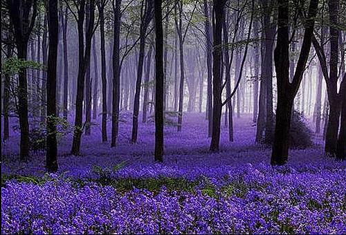 紫色的夢插圖.jpg