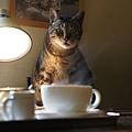 什麼!咖啡是燙的(剛剛不是叫冰咖啡嗎?)