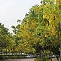 亞洲大學阿伯勒