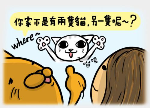 安全貓3.jpg