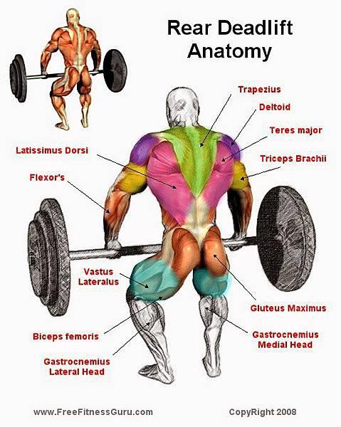 Deadlift Anatomy.jpg