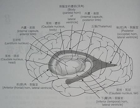 內囊1.JPG