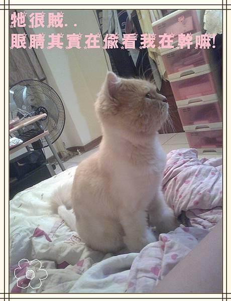 相片0554_副本