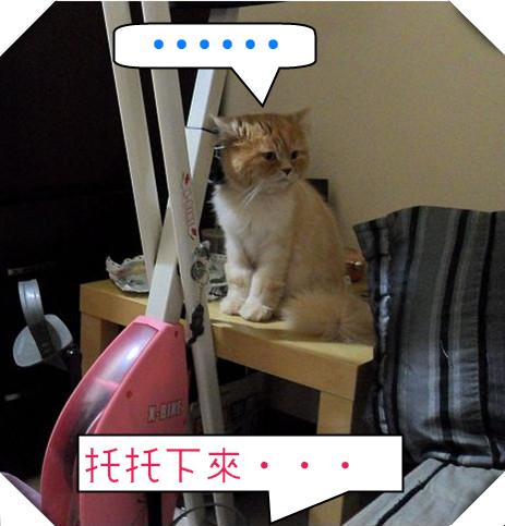 SAM_4640(001)_副本_副本