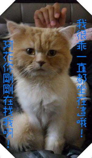 SAM_4653(001)_副本_副本
