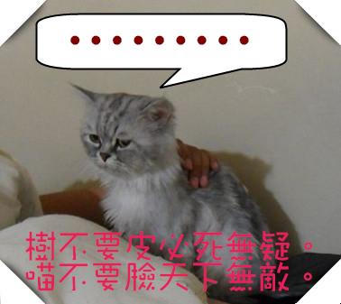 SAM_4647(001)_副本_副本