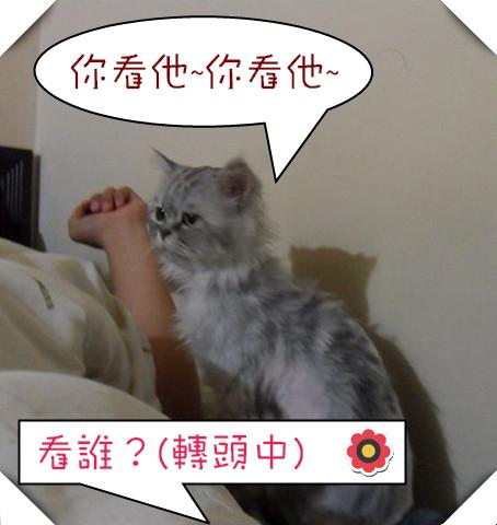 SAM_4636(001)_副本_副本