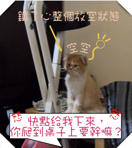 SAM_4644(001)_副本_副本