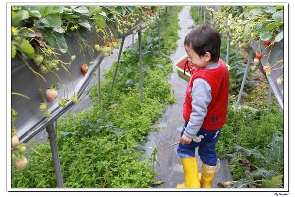 莓有良心草莓園