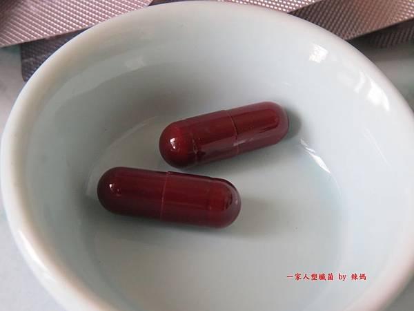 塑纖菌11.JPG